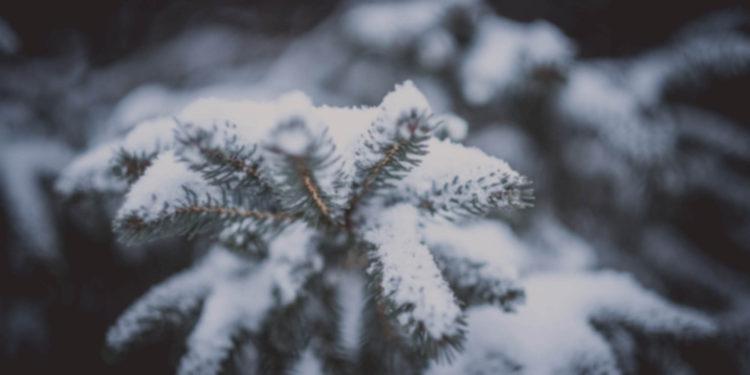 vinter-5